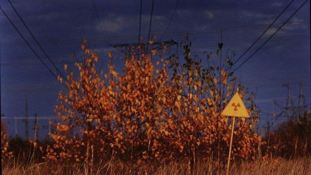 Ржавый лес в Чернобыле фото