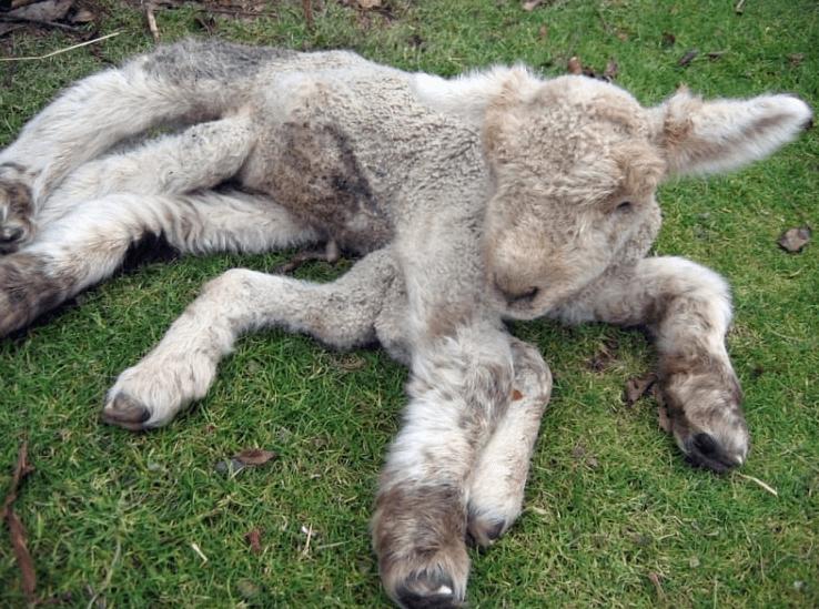 Мутанты Чернобыля фото