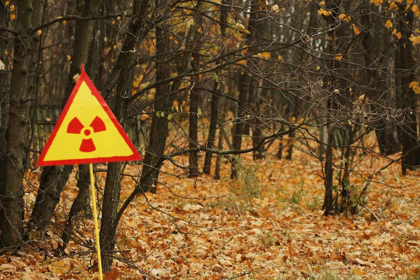 Рыжий лес в Чернобыле фото