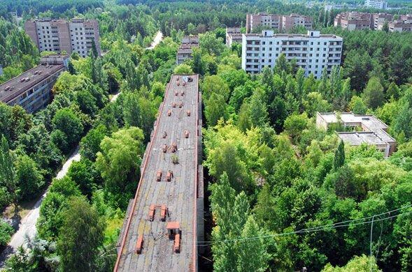 Припять и Чернобыль сегодня. Можно ли жить в Припяти или Чернобыле. Мутанты в Припяти. Дикие животные в Припяти. Мародеры в Припяти. Жизнь в Чернобыле.