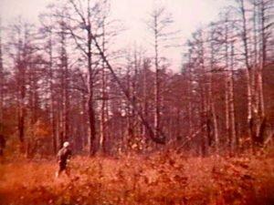 Красный или ржавый лес сейчас фото