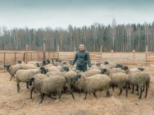 Какие животные есть в Чернобыле фото